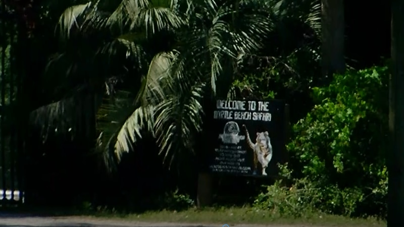 An Horry County Police report says a primate escaped from T.I.G.E.R.S. Myrtle Beach Safari and...