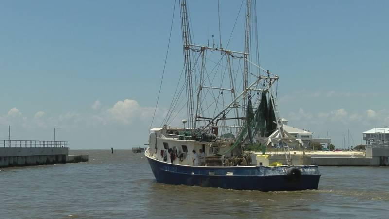 A shrimp boat leaves the Pass Christian Harbor Wednesday after unloading shrimp caught in...