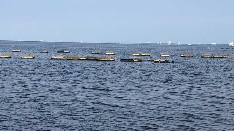 Oyster aquaculture experiment suffers damage from spillway fresh water