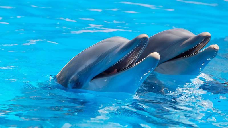 Hancock Whitney Splash Bash on September 21 will benefit the Mississippi Aquarium.