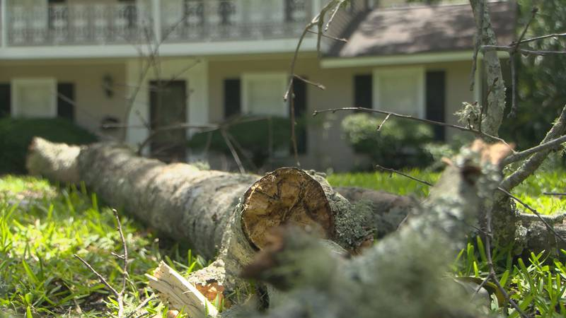A tree limb lies in the front yard of a home in Pascagoula.