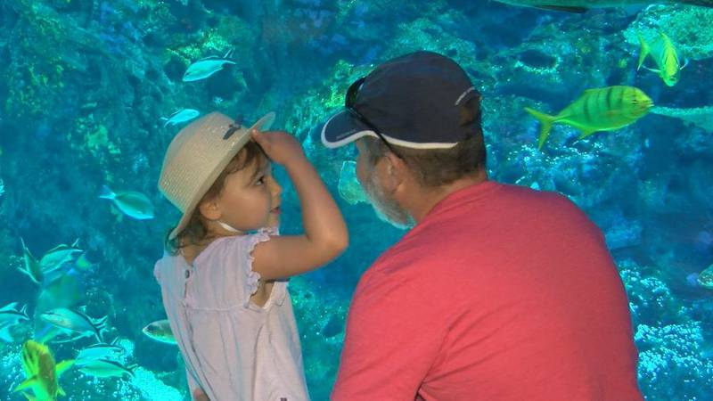 The Mississippi Aquarium is among many Coast tourist attractions benefitting from a strong...