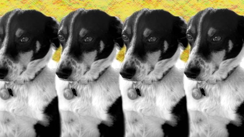 Chasing Smoke: The bizarre story of how Hunter Crisler got his dog back