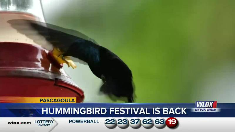 The festival originated in 2019 and last year's event was canceled due to COVID-19, but now...