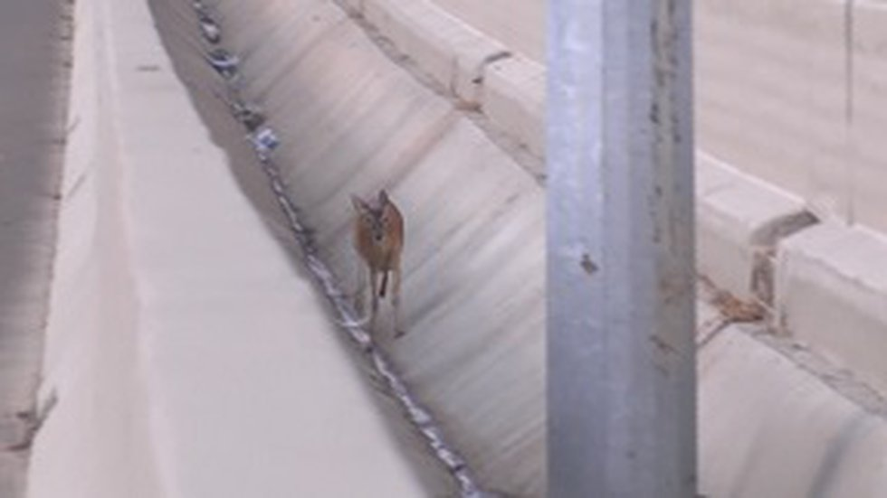 This deer runs along I-55 in Madison County in this file photo. (SOURCE: WLBT)