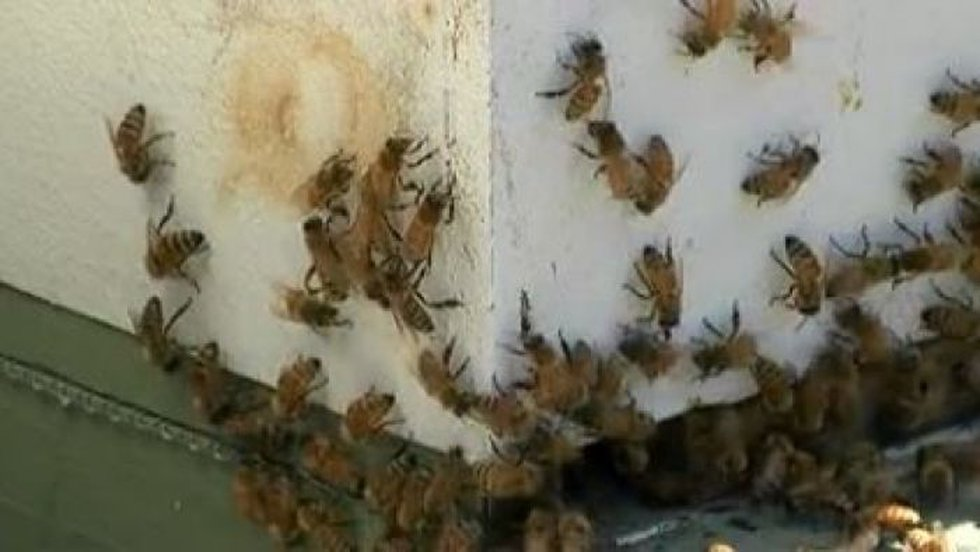 McCaffrey took us on a tour of his bee yard in Gulfport. (Photo source: WLOX)