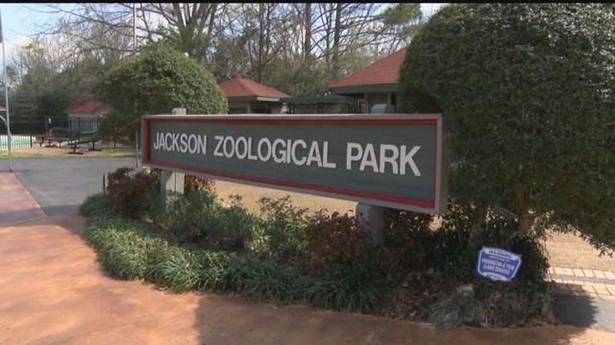 GF Default - Consider This: Jackson Zoo