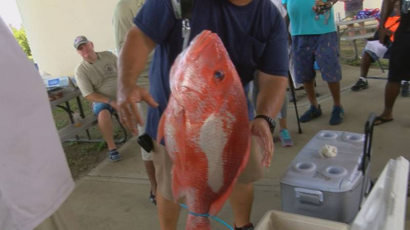 Red Snapper caught at the Wounded Warrior's fishing tournament.