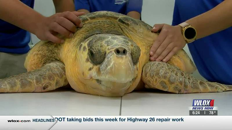 If you catch a sea turtle while fishing, do not cut the line. Call a rescue group instead. It...