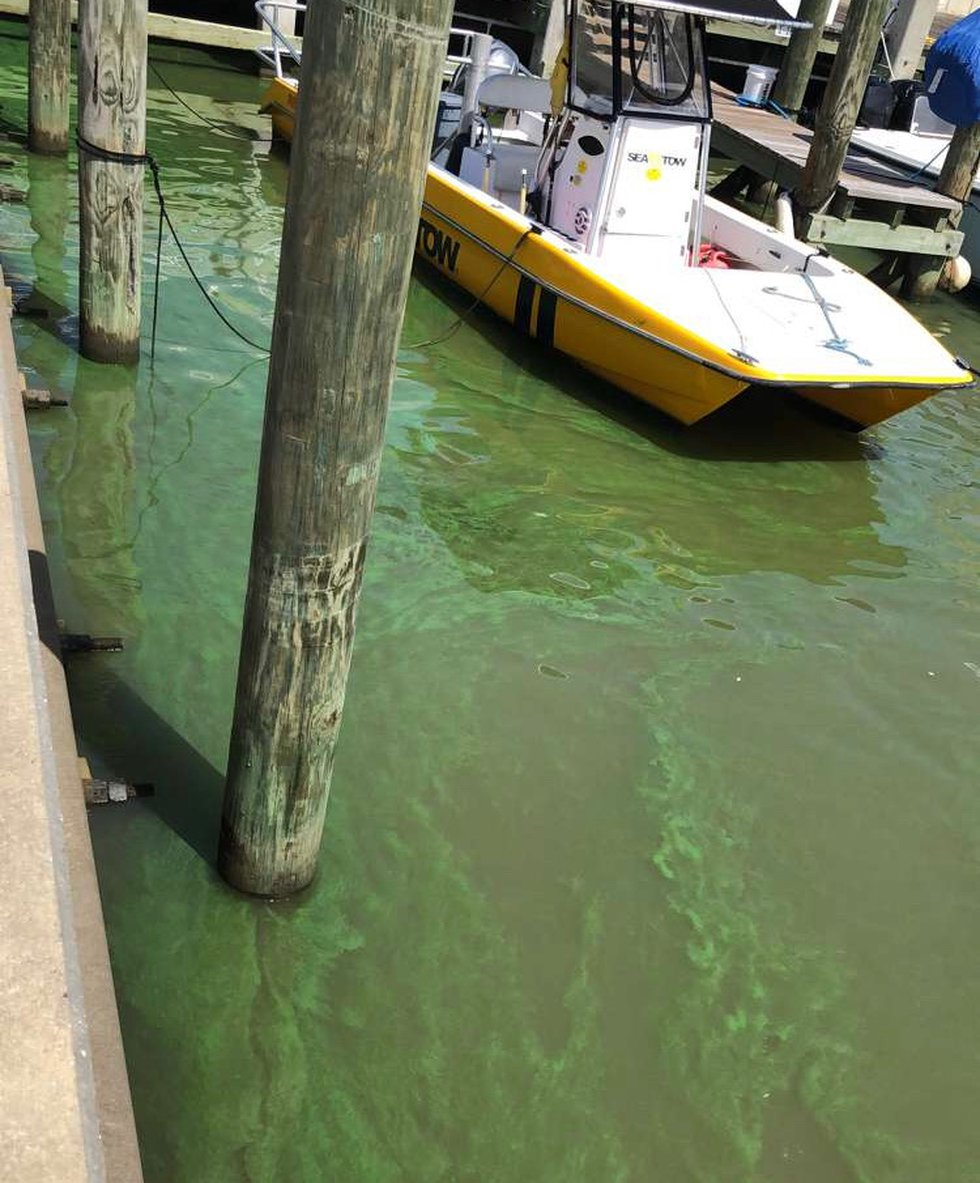 This photo shows the blue-green algae in the Bay St. Louis Harbor.