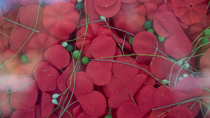Poppies are seen encased in the USAA Poppy Wall of Honor on the National Mall in Washington,...