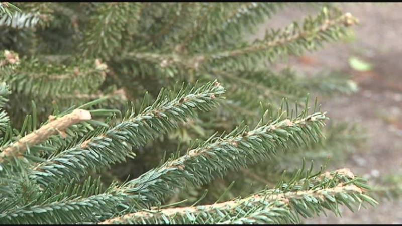 Upwards of 500 trees are recycled in Tyler according to Parks and Recreation's Gary Lynch.