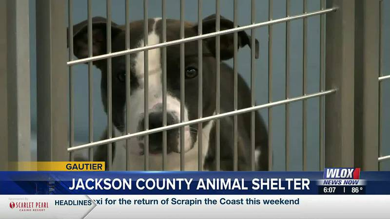 The Jackson County Animal Shelter is experiencing a crowding as adoption numbers are running low.