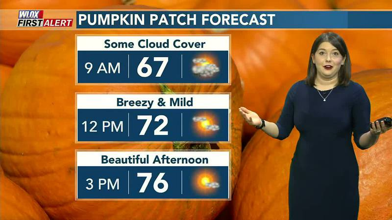 Hello Fall! It's cooler and breezy today.